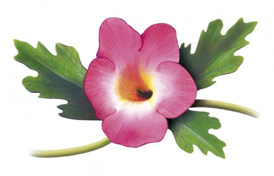 L'Harpagophytum : origine, propriétés et bienfaits..